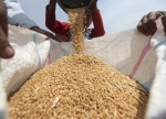 Wheat futures fall to fresh 4-week low on more U.S. rainfall