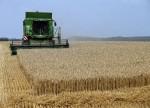 Grain futures - weekly outlook: May 11 - 15