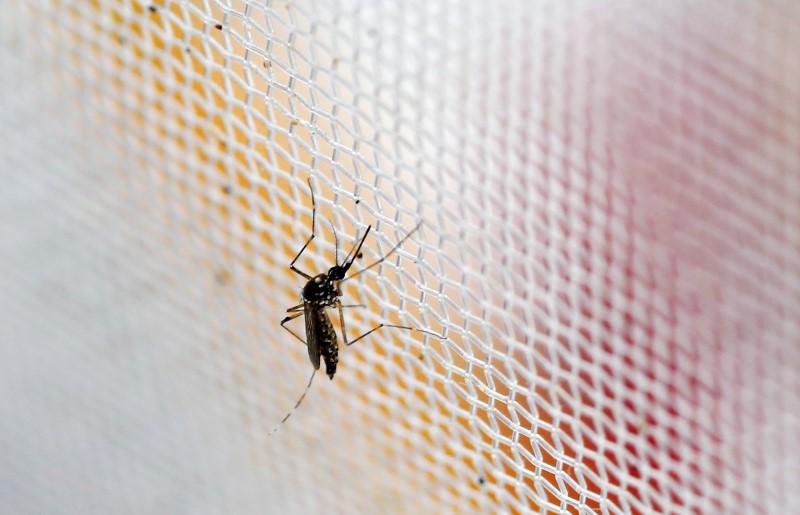 © Reuters.  Google dice que sus ingenieros trabajan con UNICEF para mapear el Zika