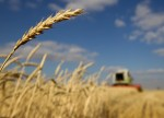 Wheat futures decline for 2nd day as U.S. weather improves